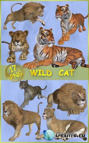 Клипарт Большие кошки — Цари природы