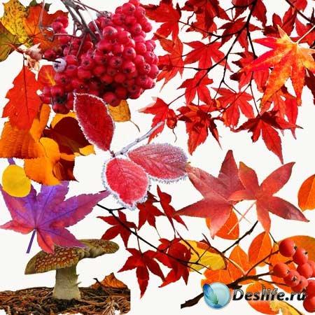Клипарт - Багряные  листья