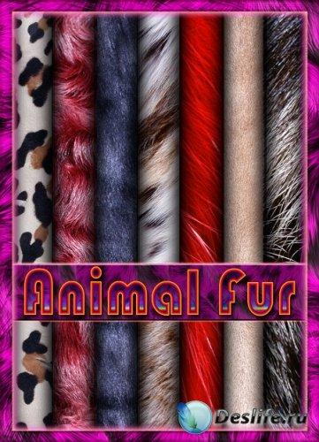 Текстуры меха / Texture Faux Fur