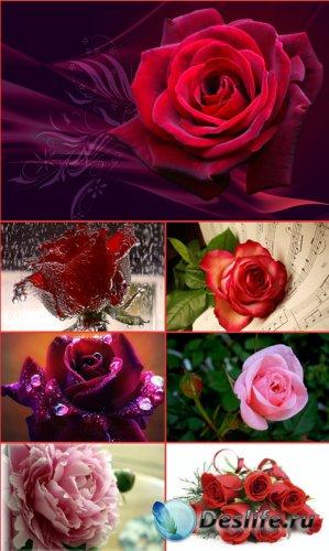 Обои для рабочего стола - Ароматные цветы