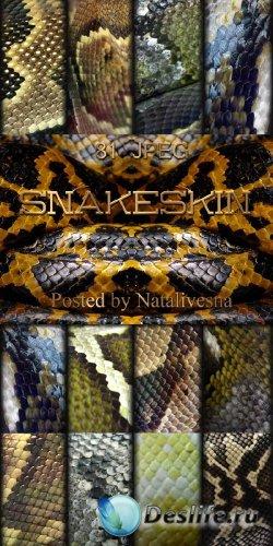 Текстуры для Дизайна – Змеиная кожа