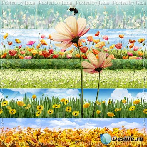 PSD Исходники - Полевые Цветы (Flowers)