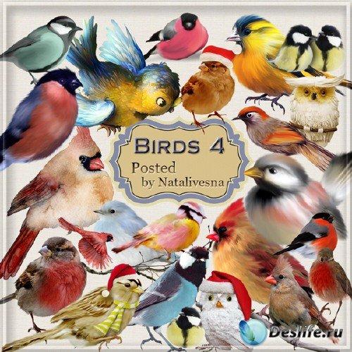 Клипарт в PNG – Зимние птички - снегири, синички