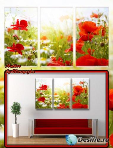 Красные маки, полевые цветы - Триптих в psd формате