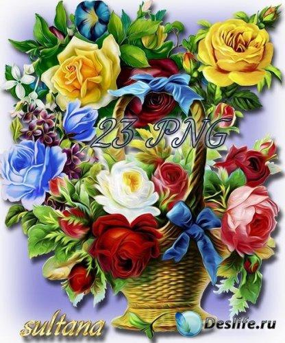 Отрисованные розы и букеты из роз на прозрачном фоне