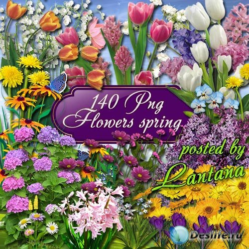 Клипарт - Весенние цветы, в них столько нежности, любви и красоты