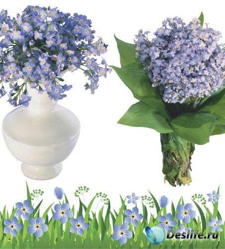 Незабудки - цветочный фотосток