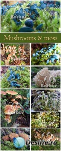 Mushrooms and moss / Мох и грибы - photo stock