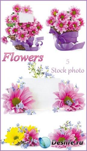 Цветы, корзина с цветами, цветы и карточка для текста - растровый клипарт