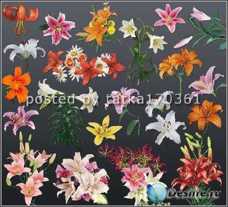 Клипарт цветочный для фотошопа - Лилии красные, белые, жёлтые и другие