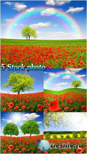 Природа, пейзажи, поле с красными маками - растровый клипарт