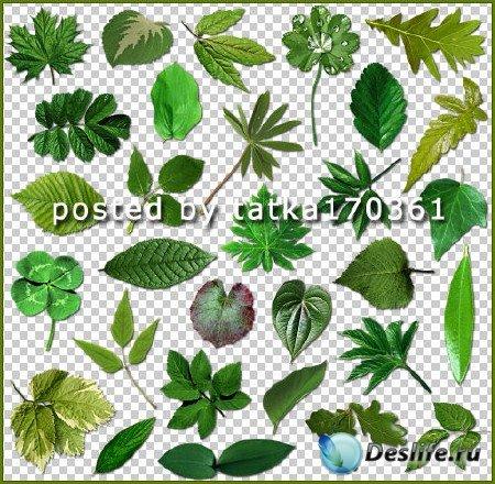 Клипарт для фотошопа - Зелёные листочки различных деревьев