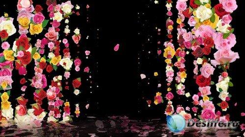 Футаж высокого качества - Ливень из цветов