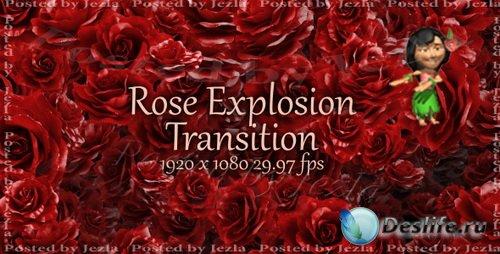 Футажи: Rose Explosion Transiton