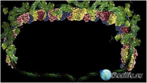 Футаж высокого качества - виноградная лоза
