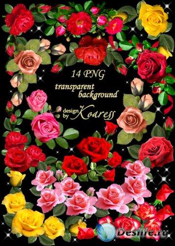 PNG клипарт для фотошопа - Уголки из розовых, желтых, красных роз