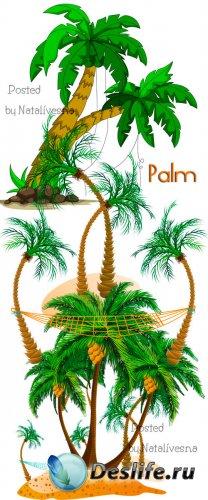 Пальмы на белом фоне в Векторе / Vector - Palm
