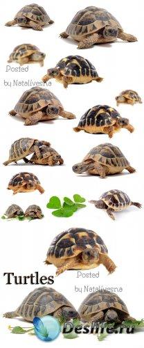Черепахи / Turtles - Stock photo