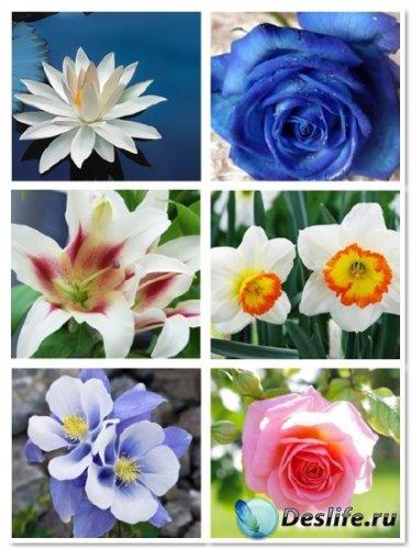 Качественные обои на рабочий стол - замечательные цветы