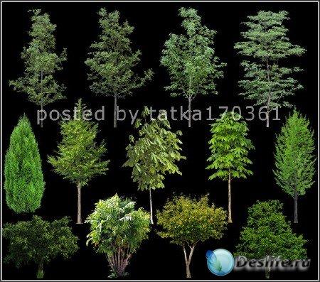 Клипарт для фотошопа - Зелёные деревья и кустарник