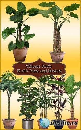 Клипарт PNG - Экзотические деревья и цветы 2