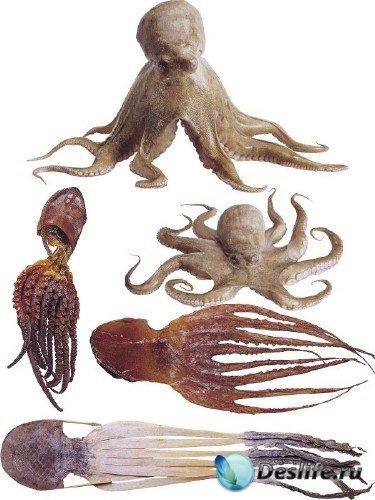 Фотосток: осьминоги живые и сушеные