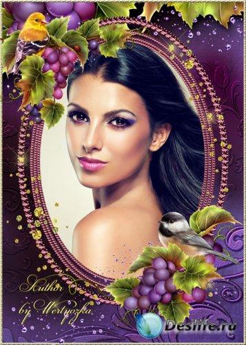 Рамка для фотошопа - птички на гроздьях винограда