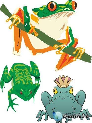 Лягушки и жабы в векторе