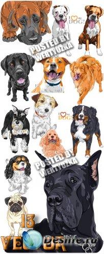 Породистые собаки / Pedigree dogs - vector stock