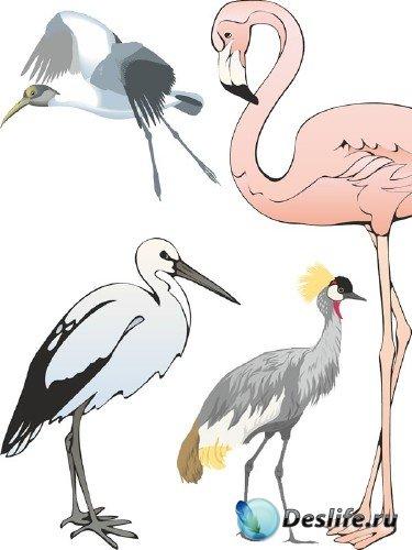Аисты, цапли и фламинго в векторе