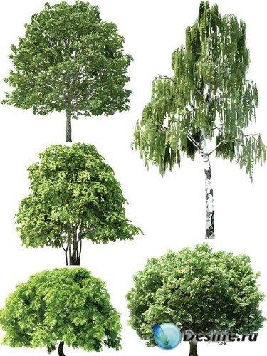Растительность в векторе: Деревья