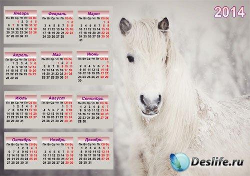 Настенный календарь - Прекрасная белоснежная лошадь
