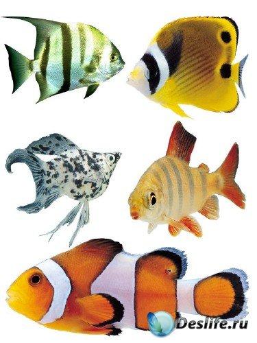 Подводный мир: Аквариумные рыбки (часть вторая)