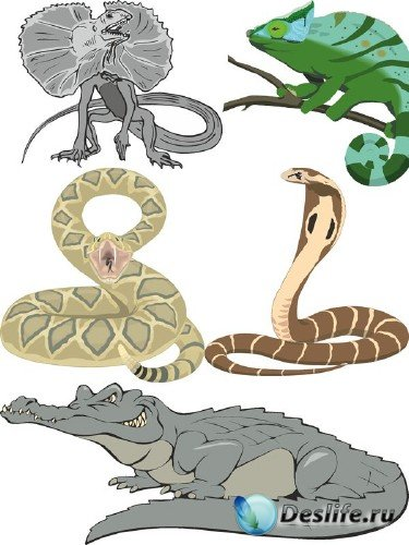 Рептилии в векторе: крокодил, змея, черепаха, ящерица и игуана