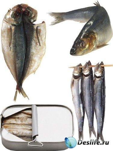 Рыба замороженная, вяленая, сырая, сушеная и вяленая (часть вторая)