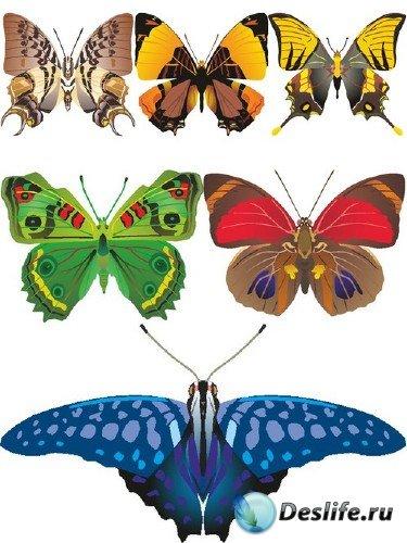 Красивые бабочки (векторный сток)