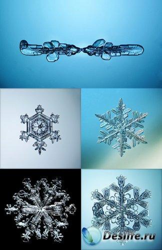 Растровый клипарт - Снежинки и кристаллы льда