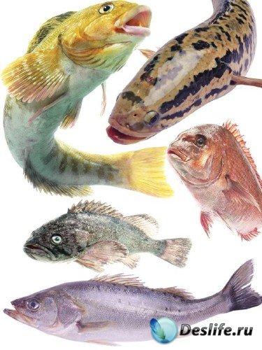 Морские обитатели: Рыба (часть 1)