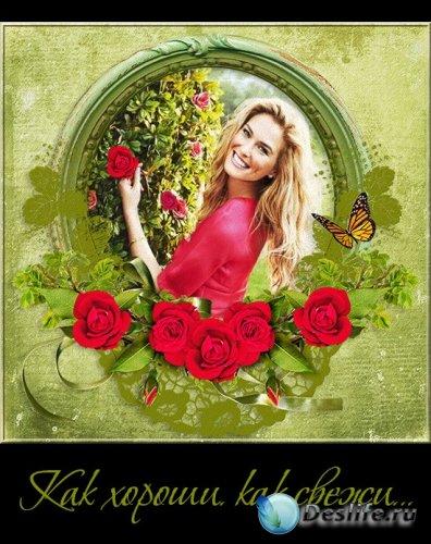 Как хороши, как свежи... - розы и композиции из роз на прозрачном фоне