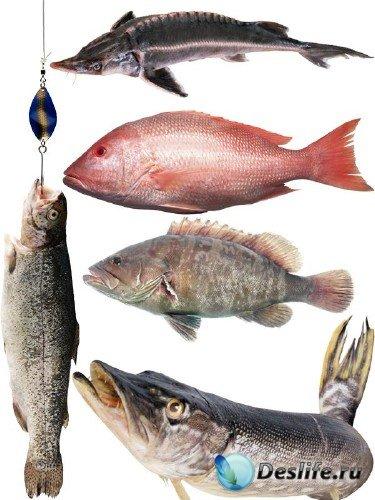 Морские обитатели: Рыба (часть 2)