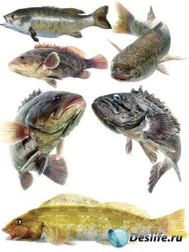 Морские обитатели: Рыба (часть 3)