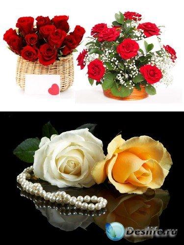 Подборка изображений прекрасных роз