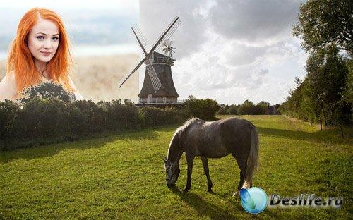 Рамка для фотографии - Лошадь пасется на зеленой поляне у мельницы