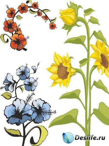 Цветы: подборка вектора