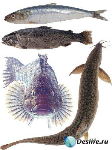 Морские обитатели: Рыба (часть 4)