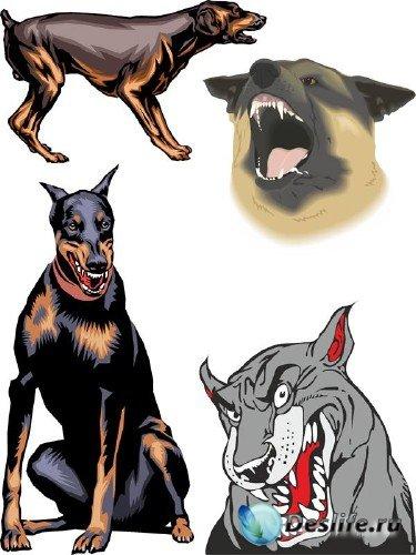 Злая собака - векторные отрисовки
