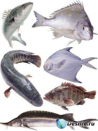 Морские обитатели: Рыба (часть 5)