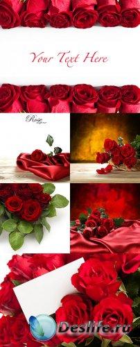 Растровый клипарт - Красные розы