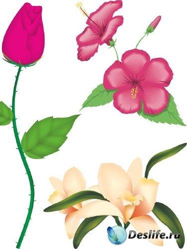 Цветы и растения - векторный клипарт