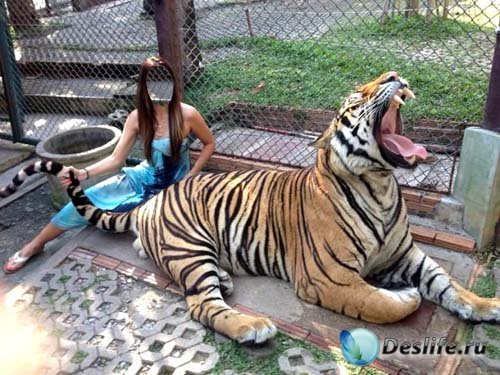 Женский костюм - Брюнетка с тигром